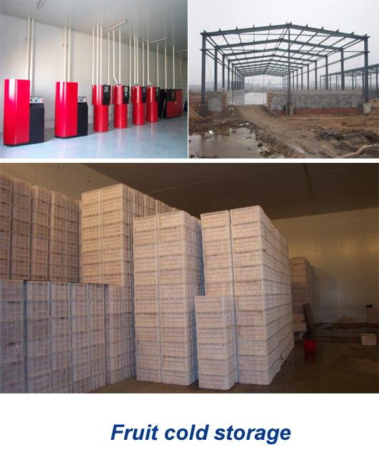 4000 Tons Apple Cold Room Storage Of Fruits And Vegetables With Air Control System