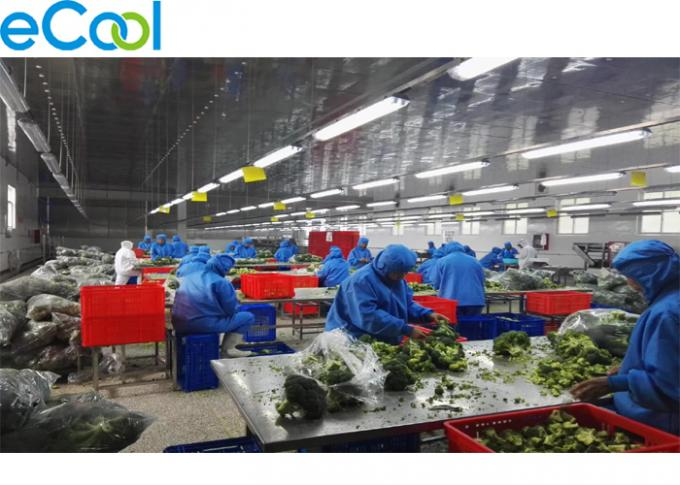 Broccoli Processing Multipurpose Cold Storage 0℃ To 10℃ With Polyurethane Switch Boards