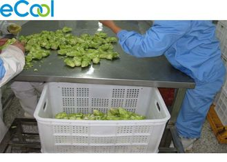 Multi Function Vegetables Processing Cold Storage For Freezing Dry Product Line
