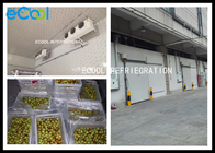 Fresh Jujube Preservation Frozen Warehouse Storage / Large Cold Storage 24 Hrs