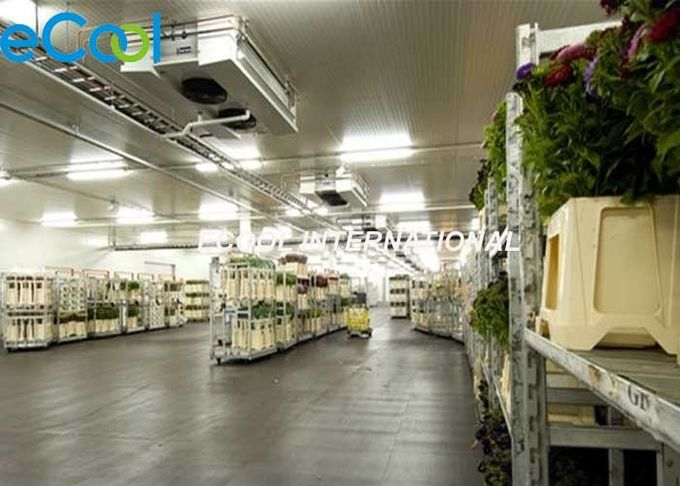 Freon Refrigeration Agriculture Cold Storage / Large Fruit Vegetable Storage